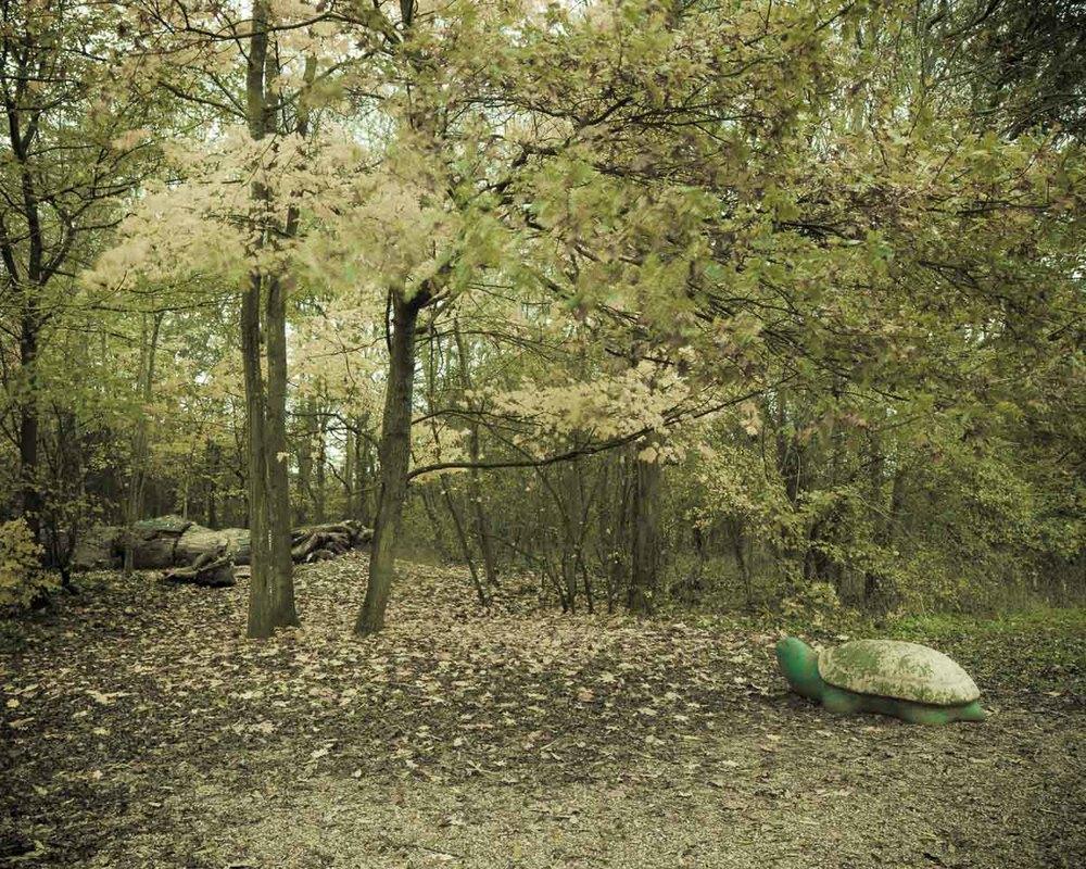 Lieux abandonnés - le bon chemin - tortue dans les bois