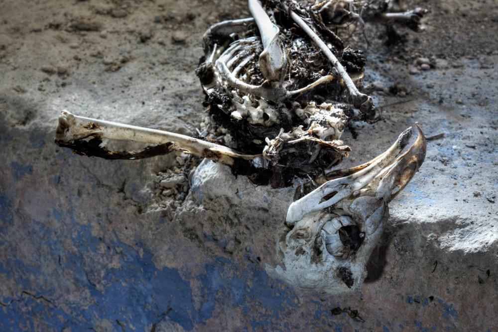 Lieux abandonnés - Cabane de pêcheur - le squelette d'oiseau