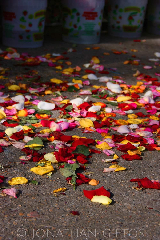 Rose Petals (2005)