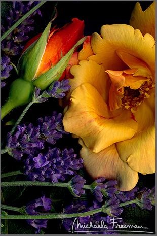 lavender-3.jpg