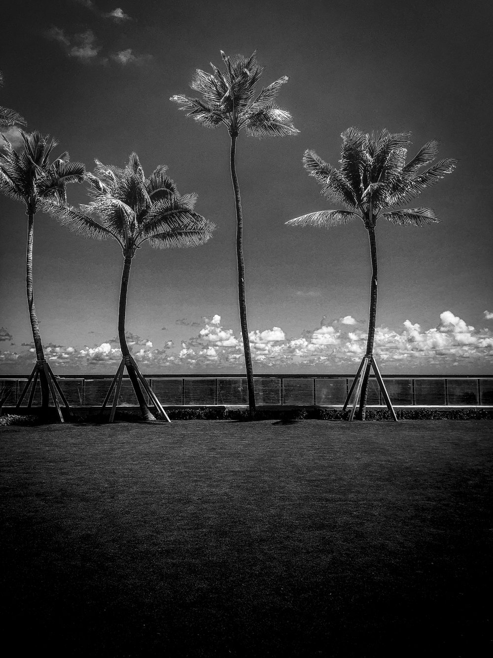palm beach palms b+w.jpg