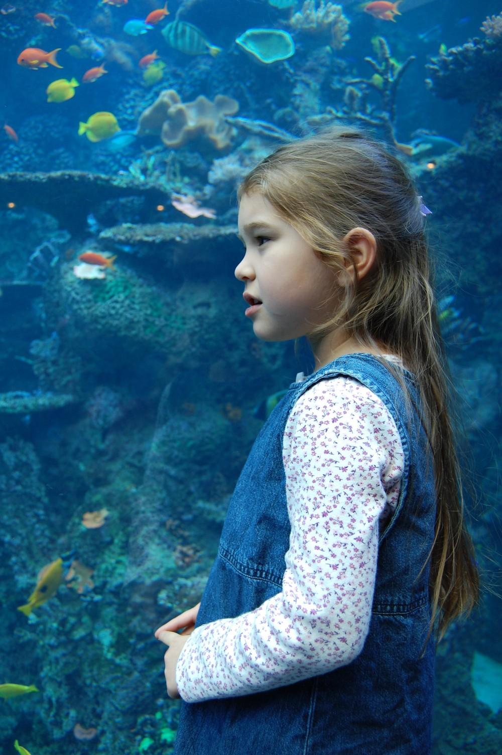 Enjoying the Atlanta, Georgia Aquarium (November 2008)