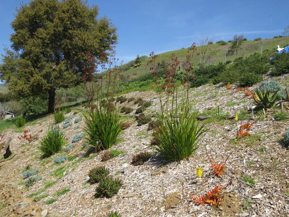 San Luis Obispo Botanical Gardens Fire Safety Pergola