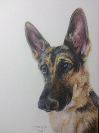 Charlie; 5x7; Colored Pencil on Paper. A sample of a pet portrait.
