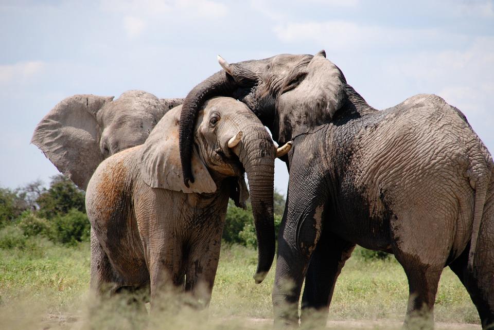 Africa - Grandes animais
