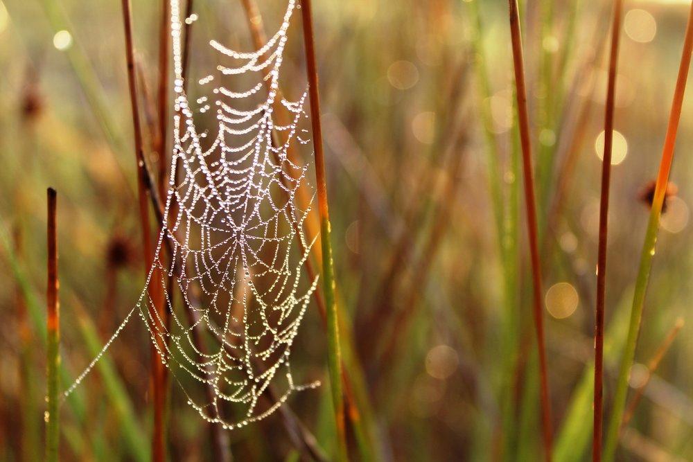 spiderweb-2770975_1920.jpg