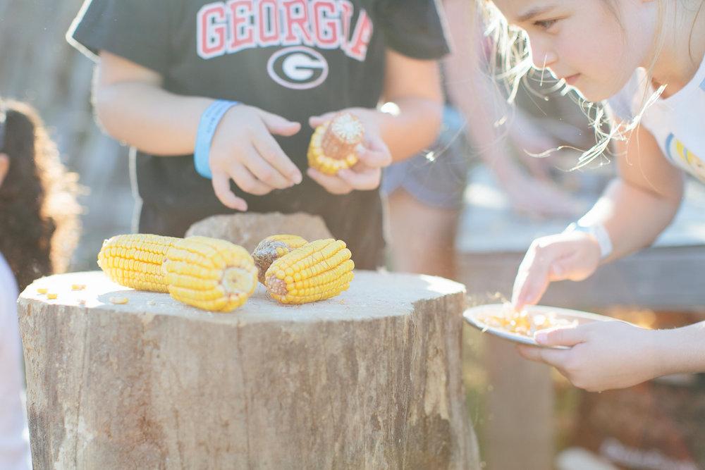 Corn Maze Sept. 2014-0009.jpg