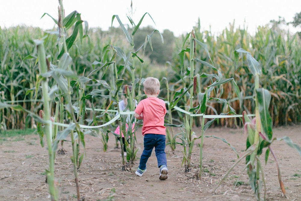 Corn Maze Sept. 2014-0048.jpg
