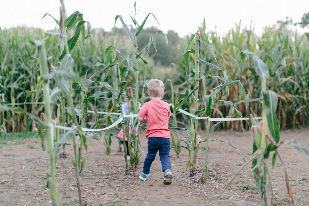 Corn+Maze+Sept.+2014-0048.jpg
