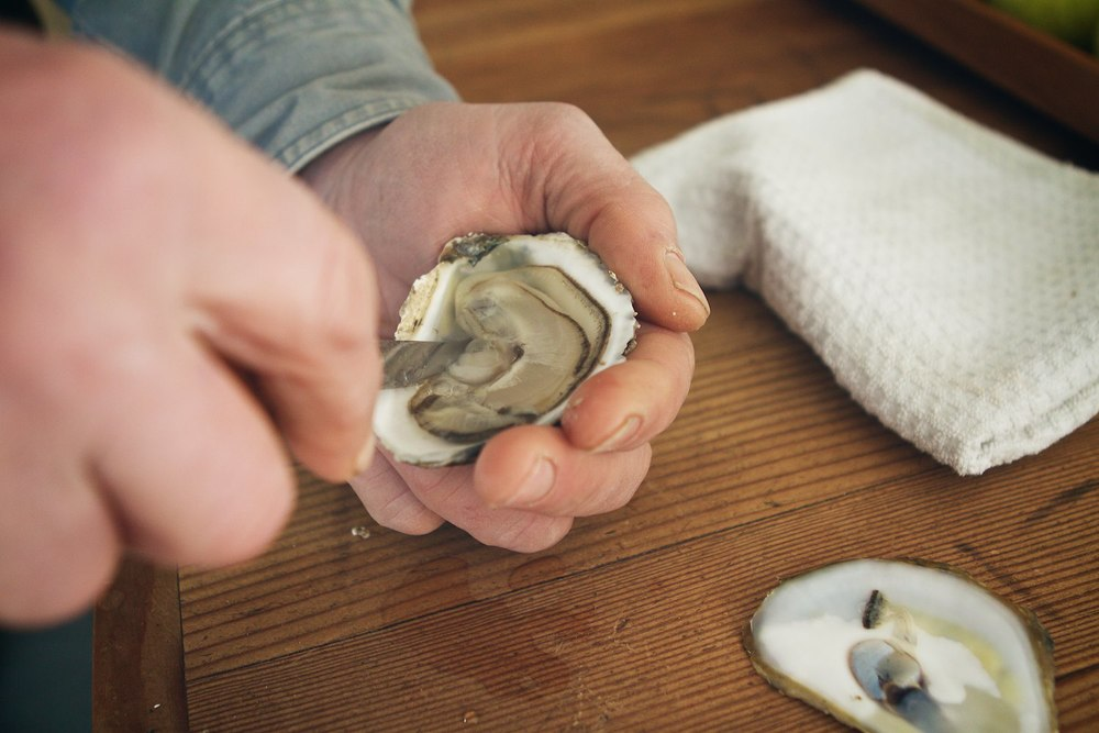 The final step is to separate the meat from the bottom shell.  To do this, scrape the knife along the inside of the bottom shell under the meat.  Remove any bits of shell or debris with your knife. Once the meat is loose the oyster is ready.