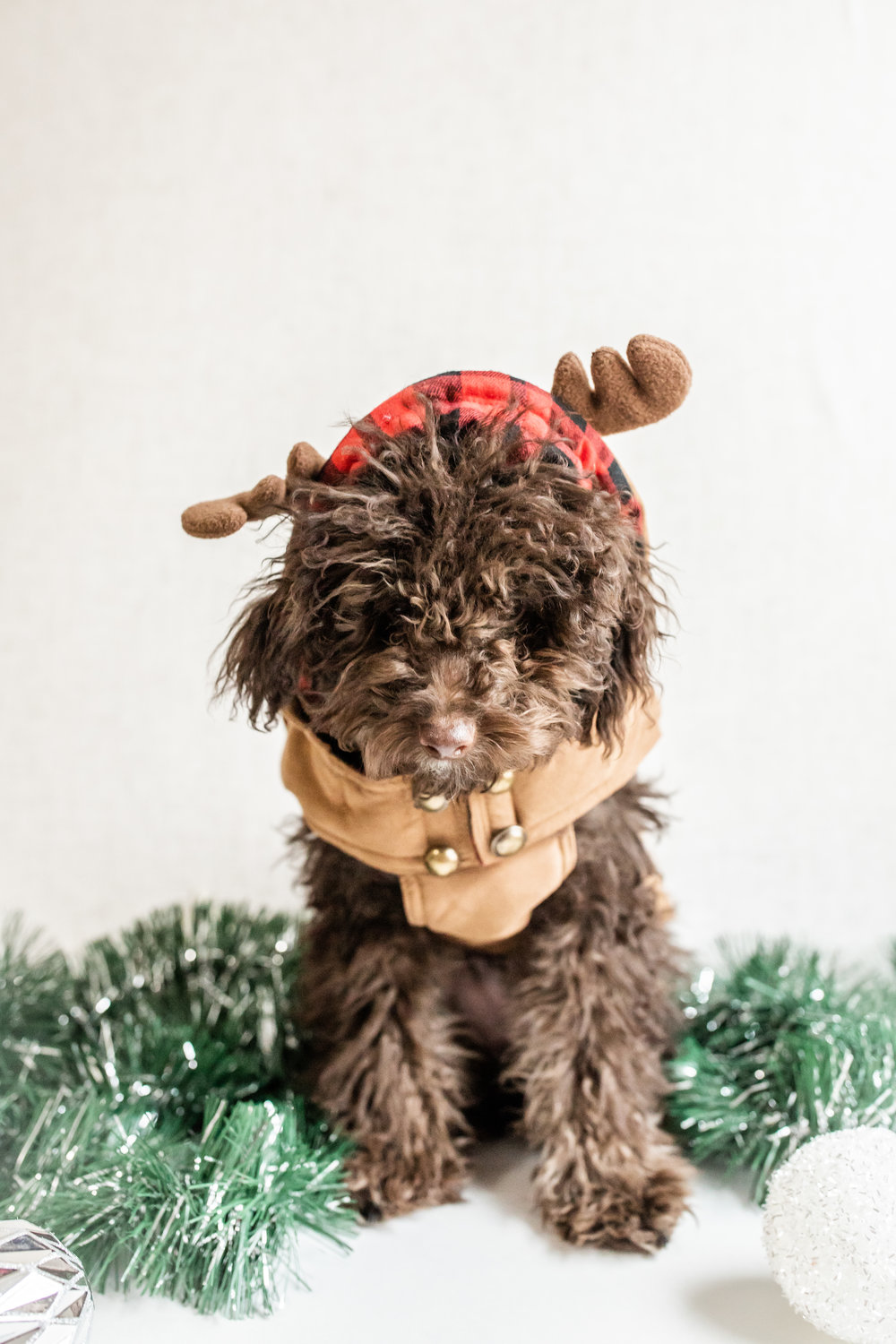 WillowAndWinston_Christmas2018-22.jpg