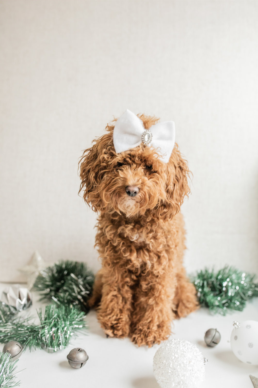 WillowAndWinston_Christmas2018-7.jpg