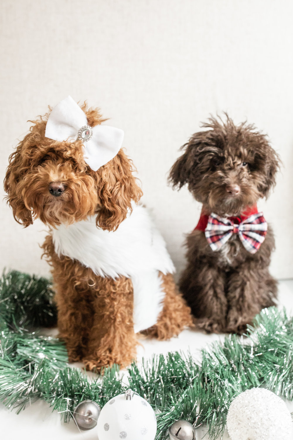 WillowAndWinston_Christmas2018-83.jpg
