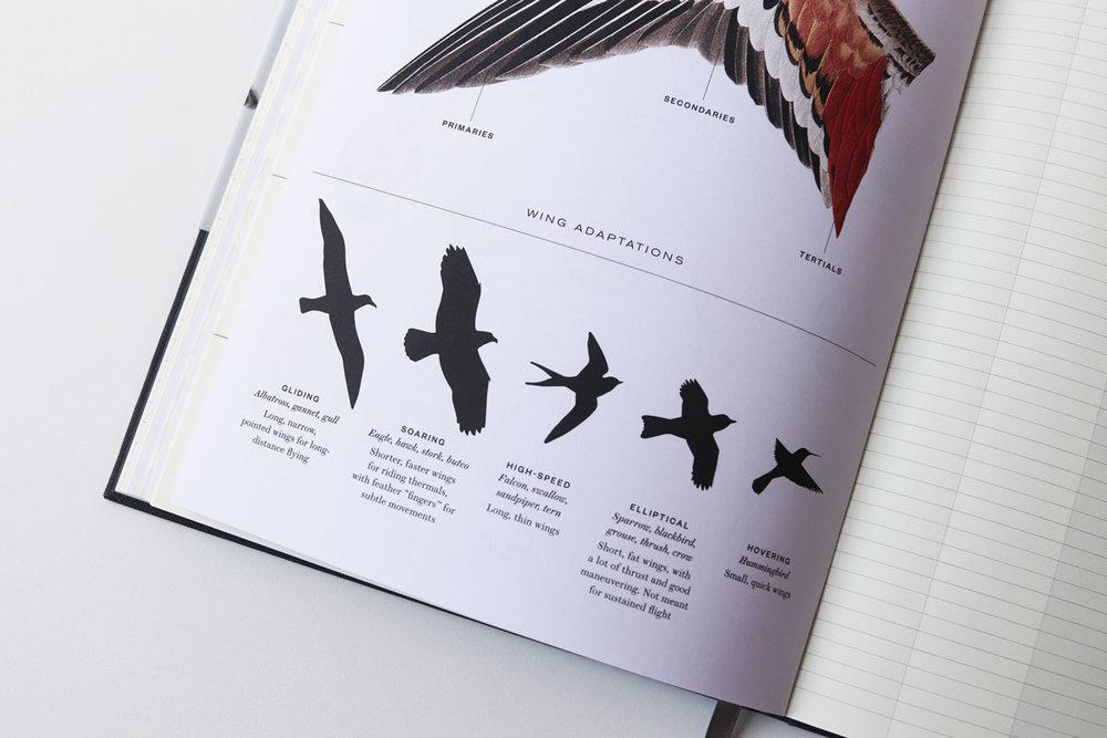 24_Birds.jpg