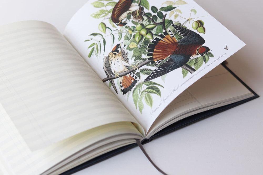 27_Birds.jpg