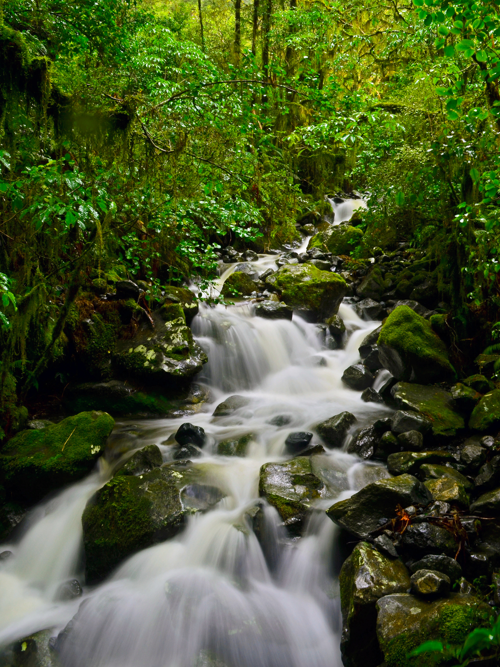 [23] Lush Rainforest Streams, South Island.