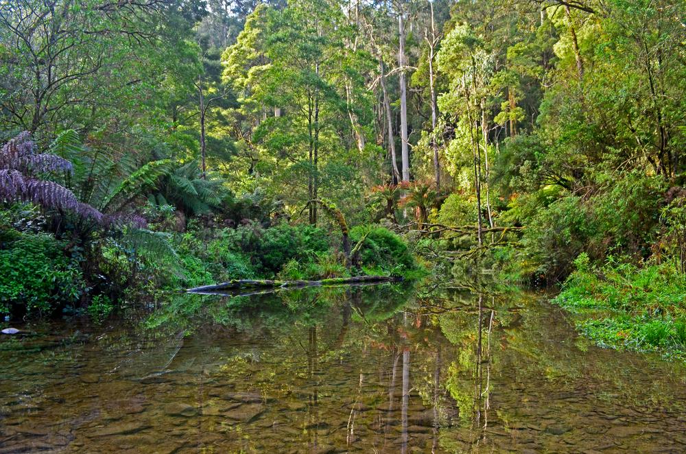 [2] Ponds of Cape Otway, Victoria.
