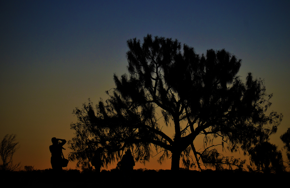 [13] Outback Silhouettes, Northern Territory.