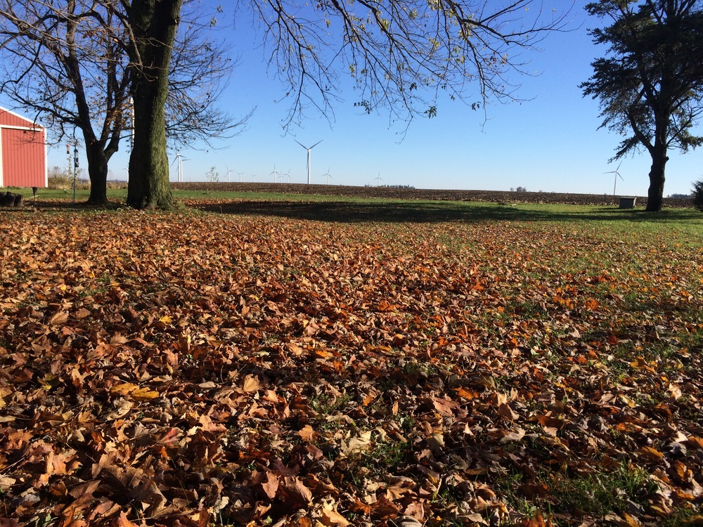 A carpet of leaves.  But I'm not raking them - no sir!