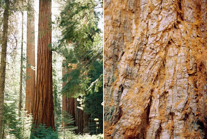 Yosemite-67.jpg