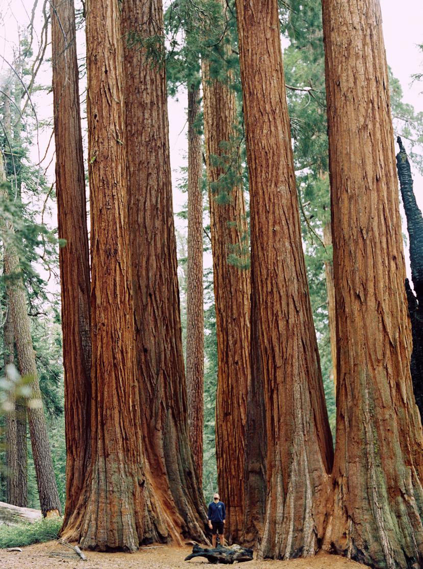 Yosemite-73.jpg