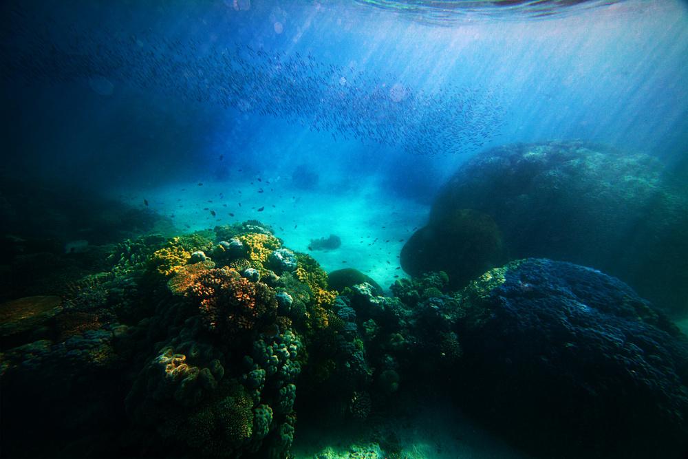 underwater_1.jpg