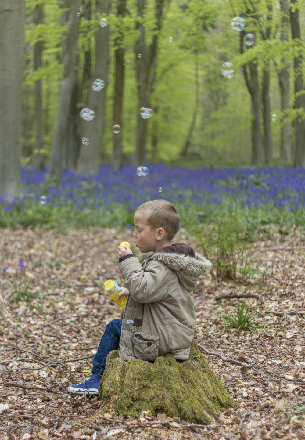Ralphie Amongst the Bluebell Bubbles - CCI-2467.jpg