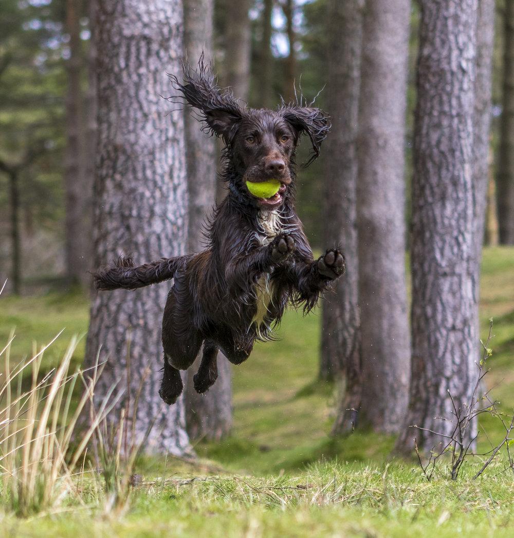 Percy Jumping.jpg