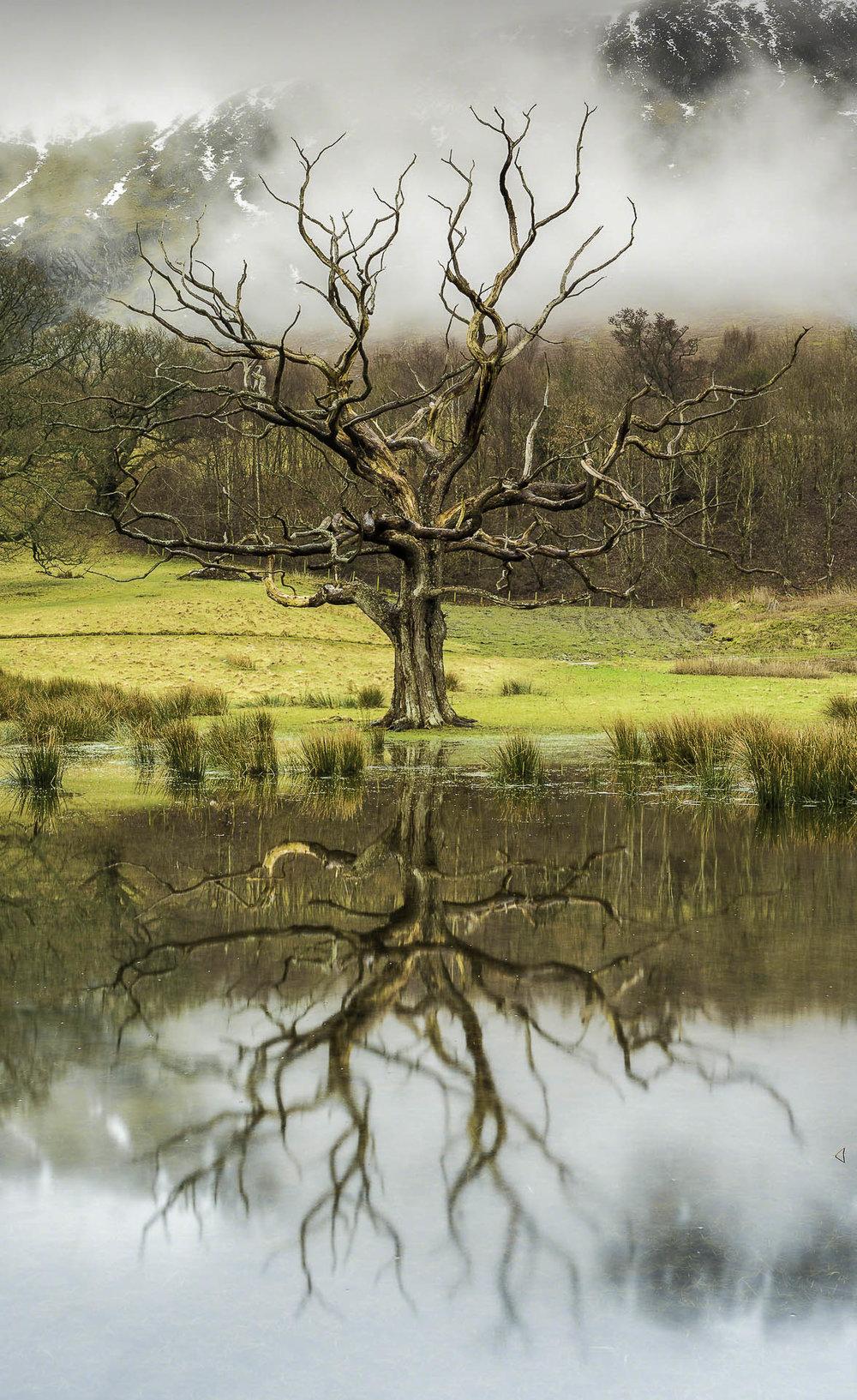 The Lifeless Tree - Blog Image 4x12.jpg