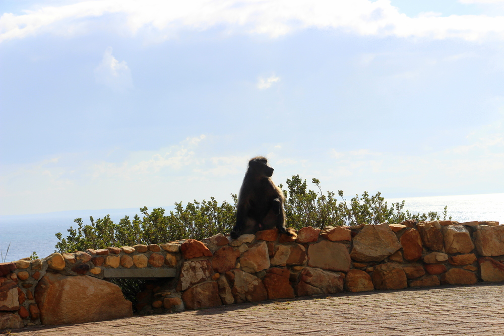 Baboons.  Are.  Everywhere.