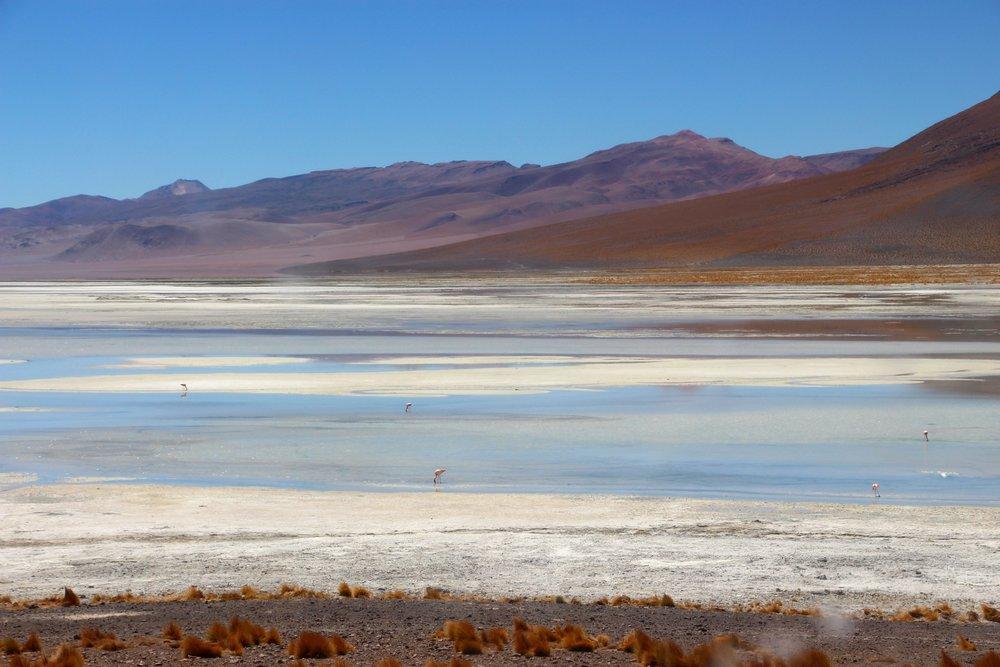 Flamingos Salt Flats Bolivia