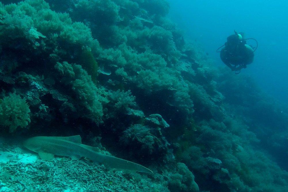 Palau Scuba