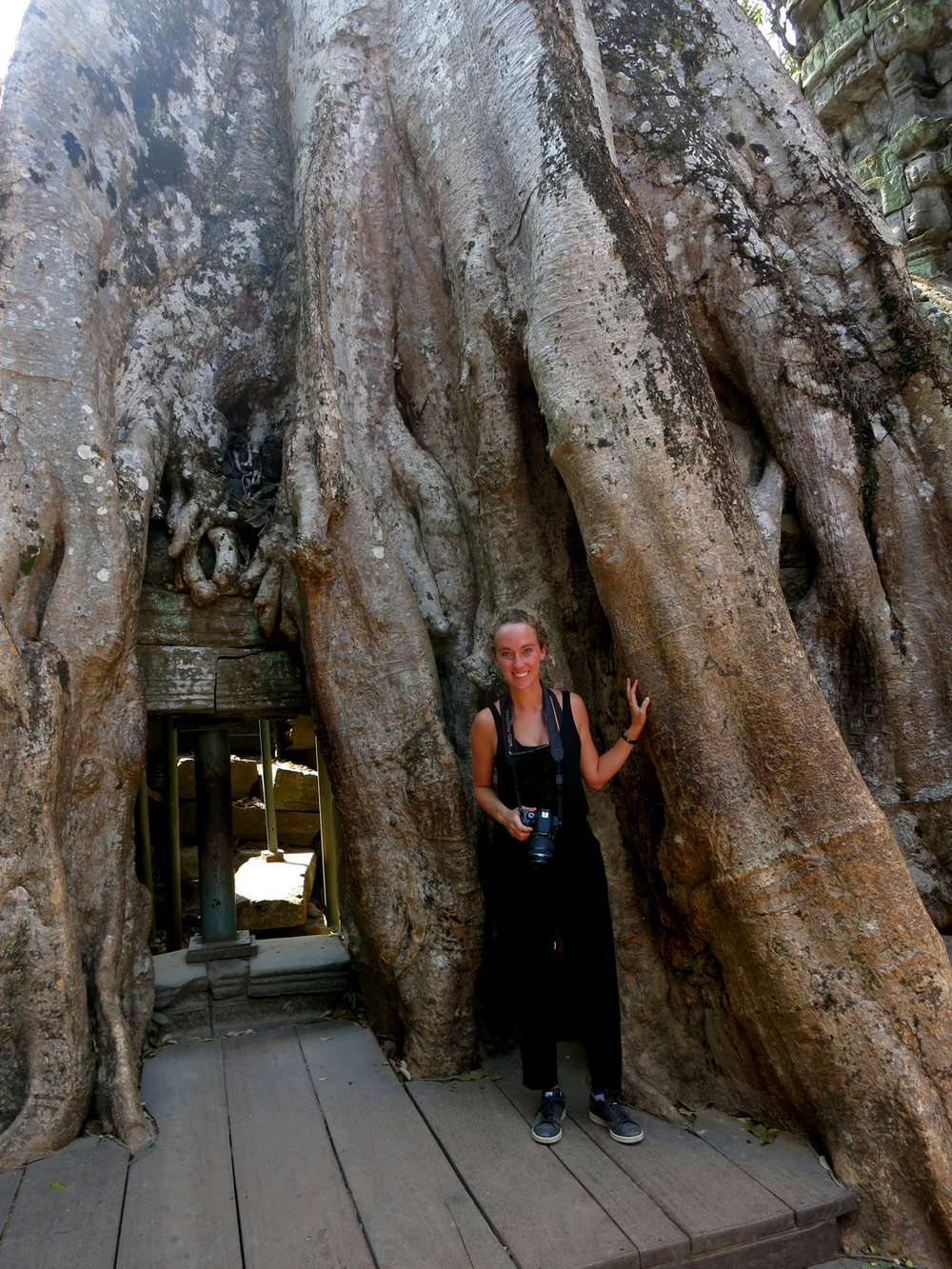 Angkor Tree