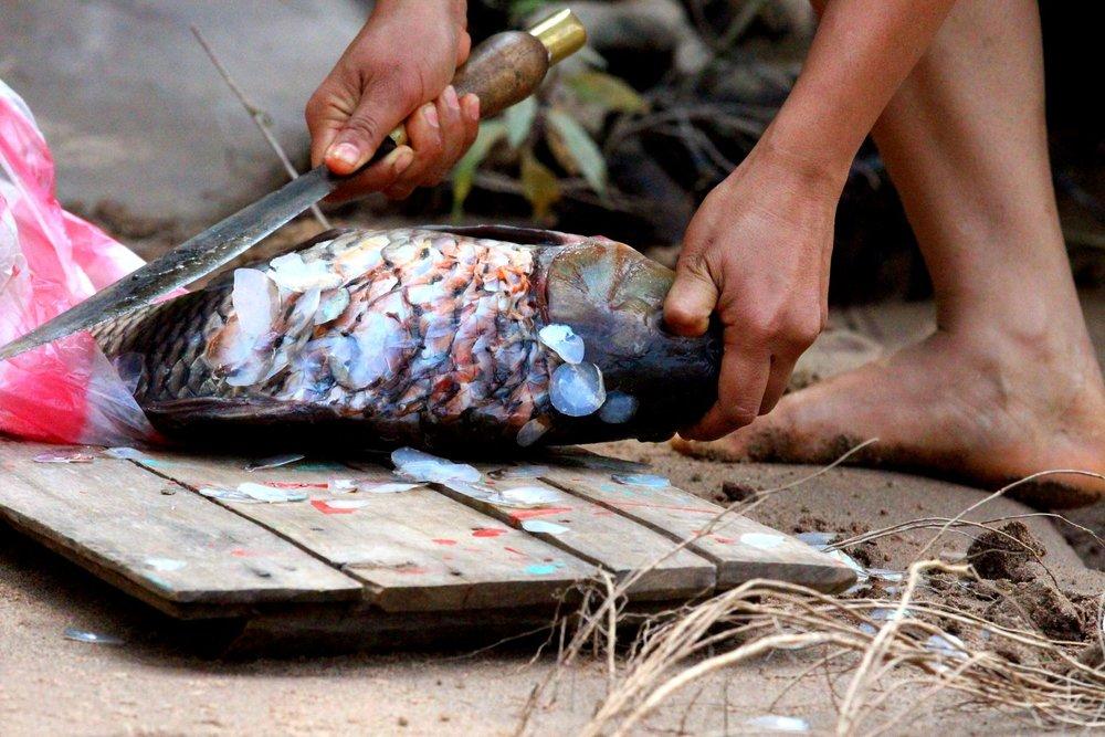 Laos Fish
