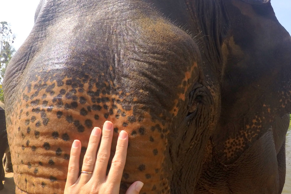 elephant park chang mai