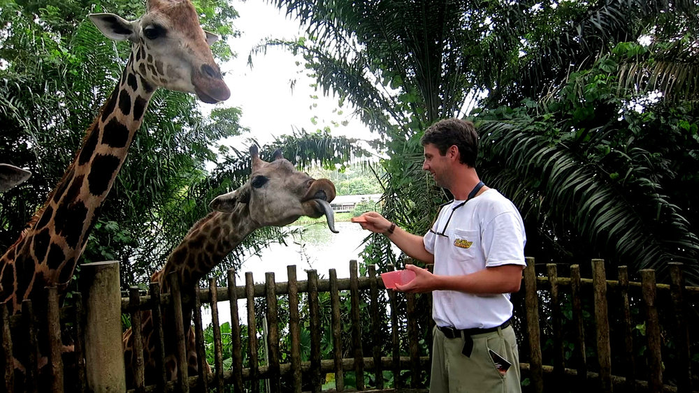 Feed Giraffe Singapore Zoo