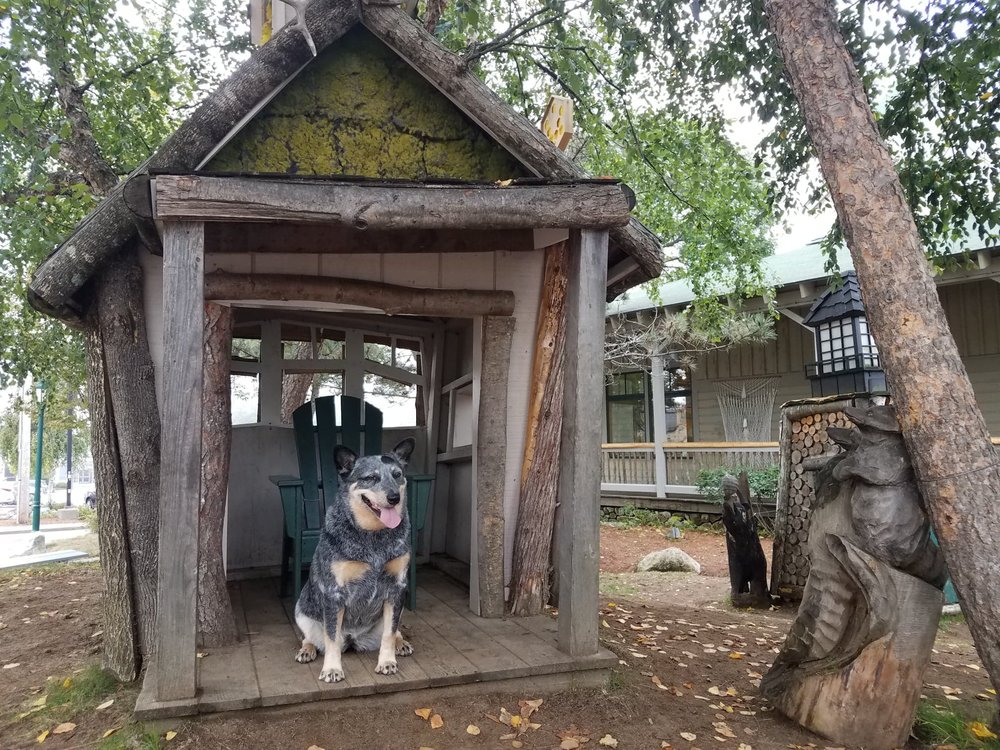 Guys can this be my new dog house PLEASE!!!!!!