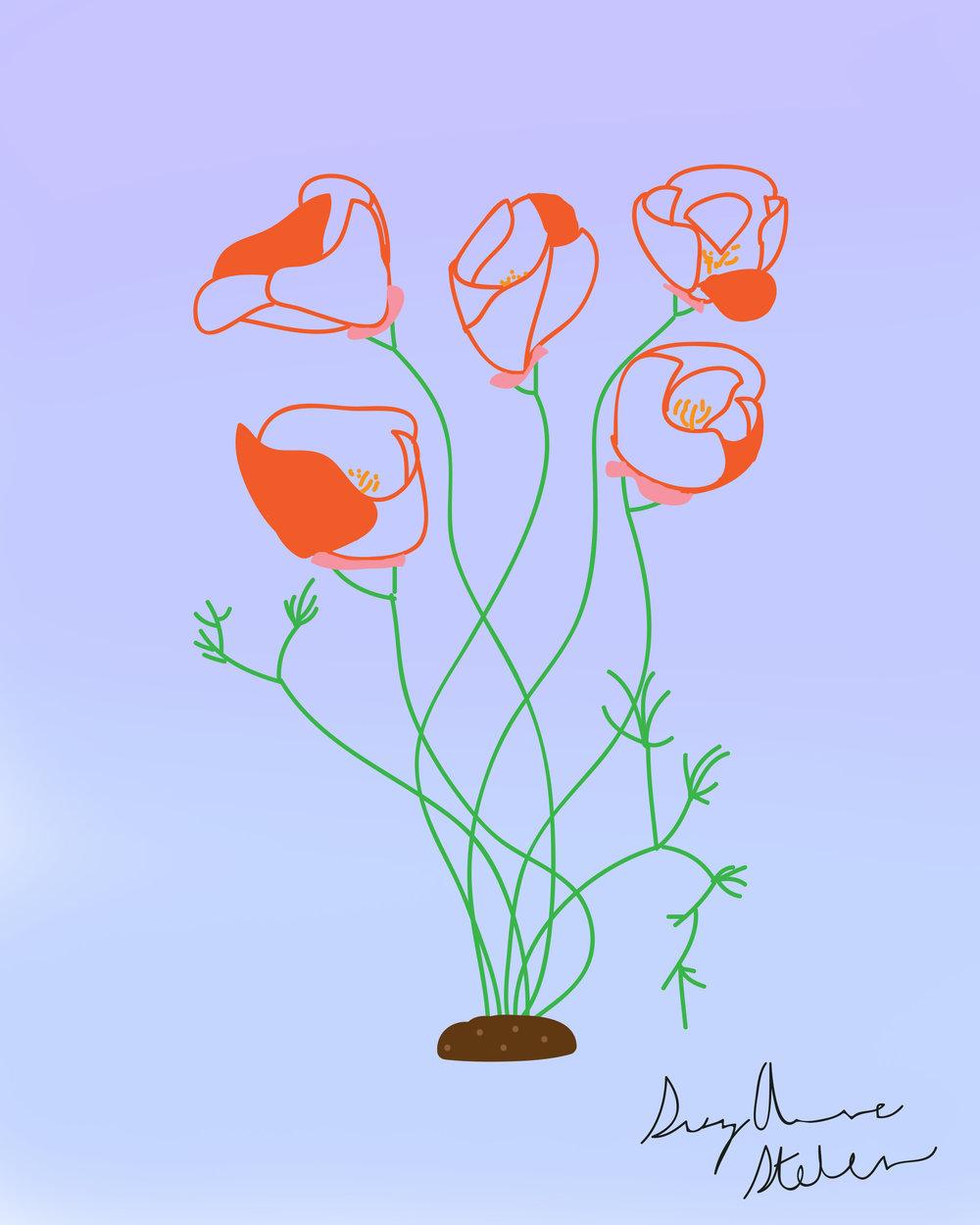 poppys bluebgrnd.jpg