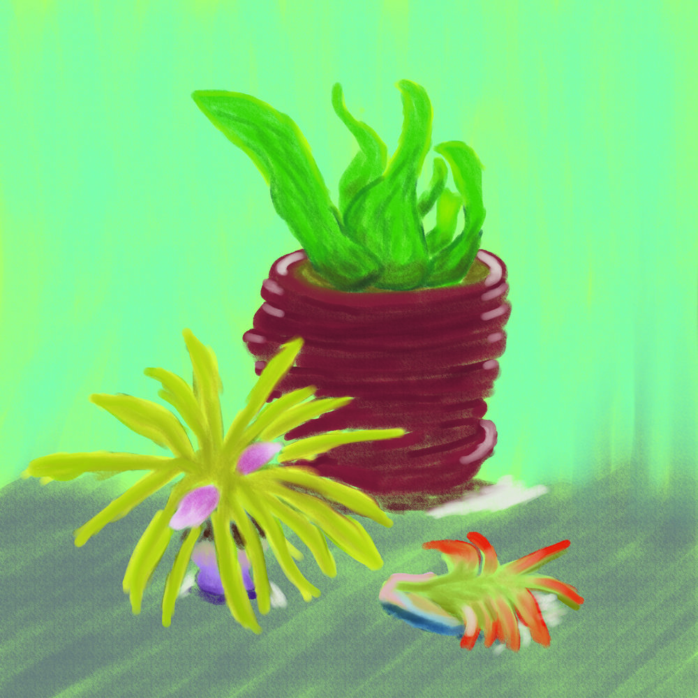 succulentstilllife.jpg