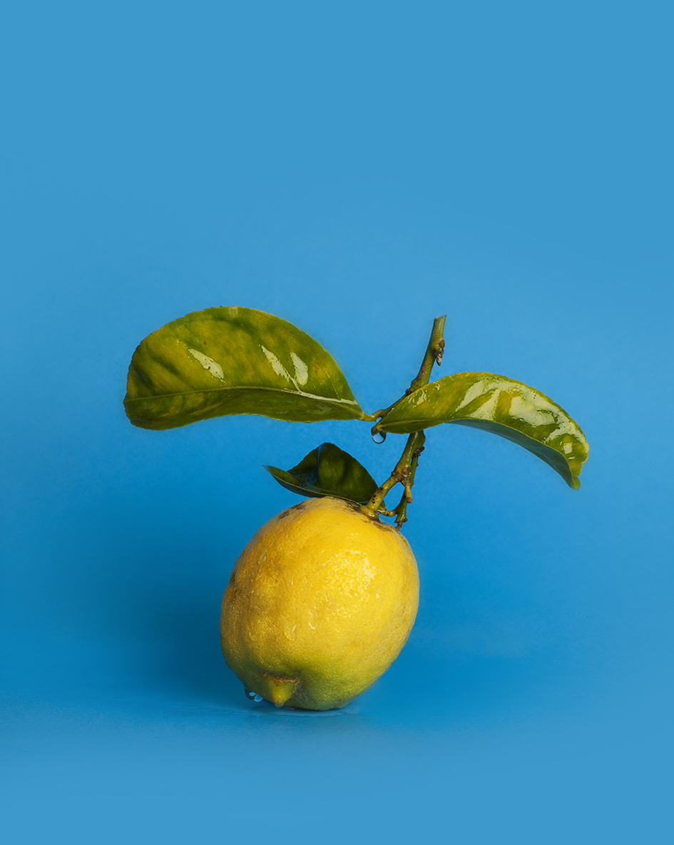 Hazel - colour photograph, 40 x 50 cm, edition of 5