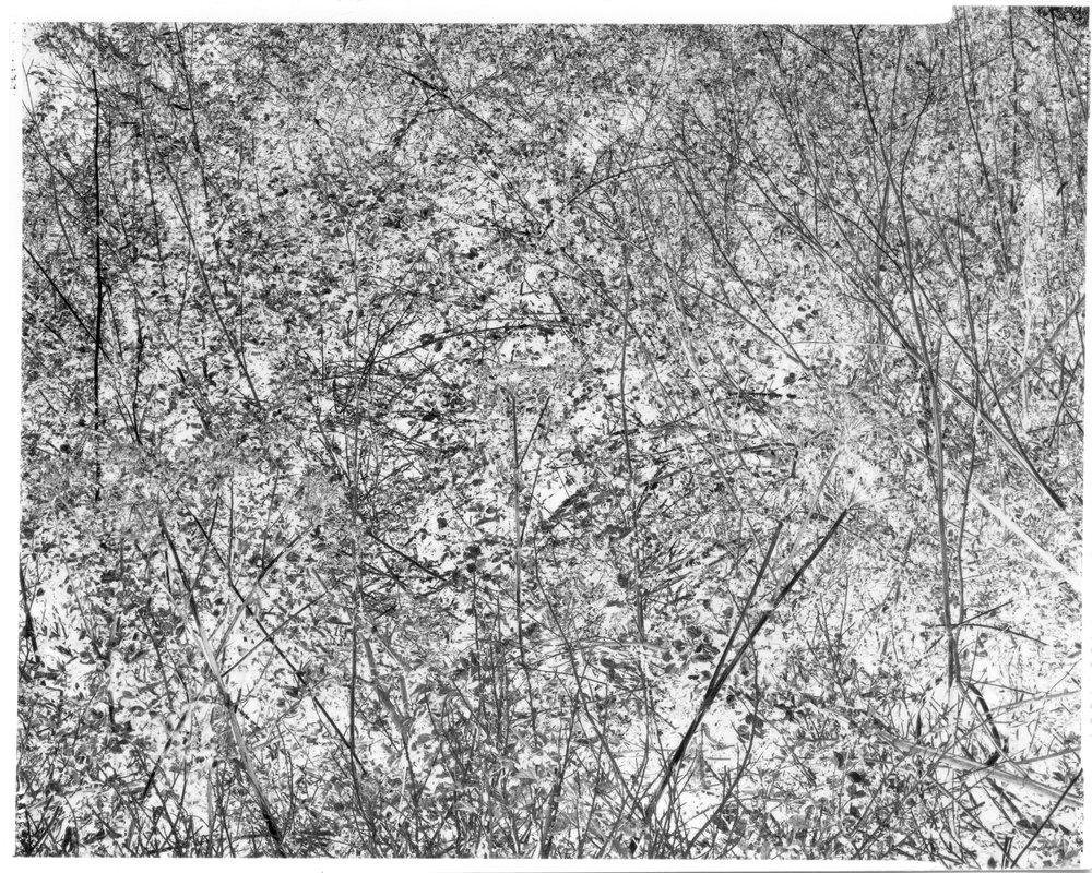 moongate_scan_002_v2.jpg