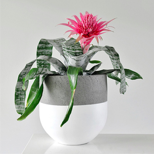 Concrete Tall Pot    Paint colour can be selected as top, bottom or middle band of pot.  Colour choices: Black, White or Gold