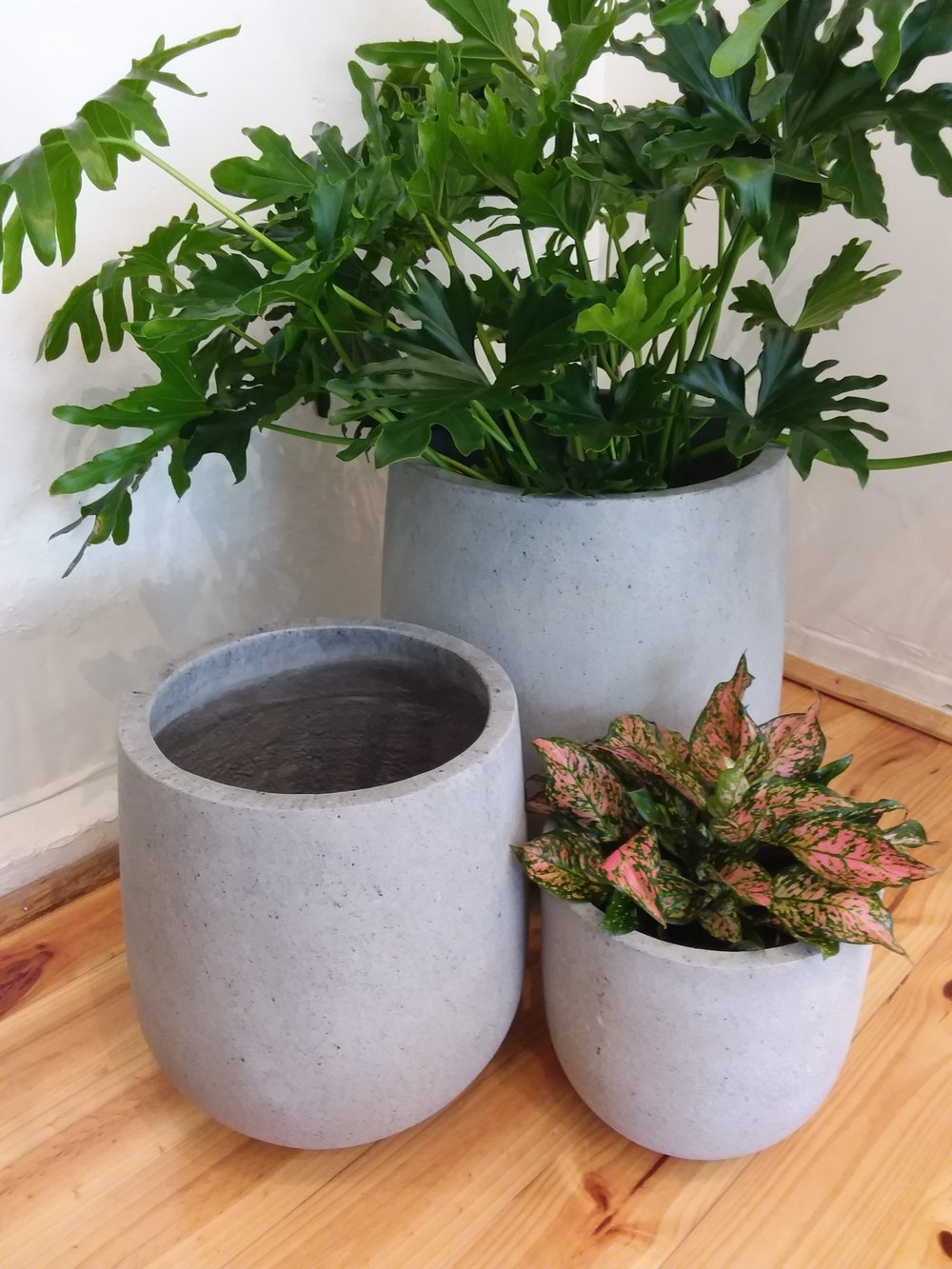 Concrete Tulip Pots  Colour Choices: Concrete or White  Medium (280mm W x 300mm H) $110.00  Large (380mm W x 425mm H) $145.00  E Large (500mm W x 550mm H) $220.00