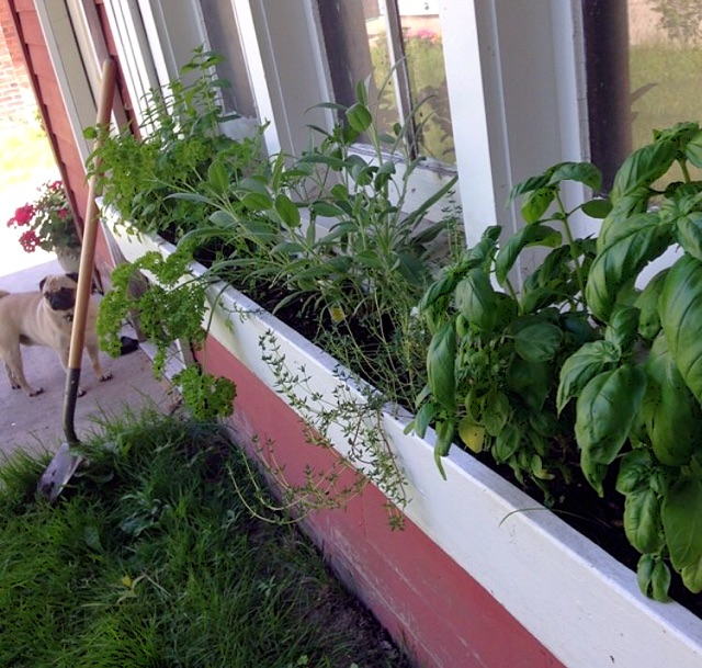 Window+Box+Herb+Garden.jpg