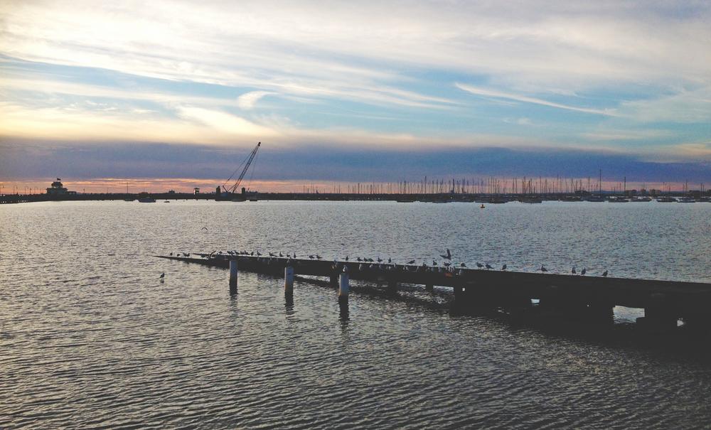 St Kilda seagulls.JPG