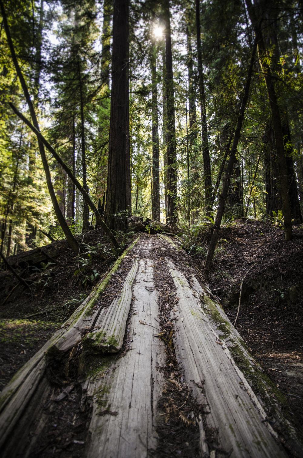 Redwoods_2.JPG