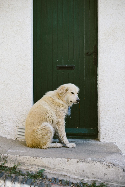 Cadaqués-doors-dog