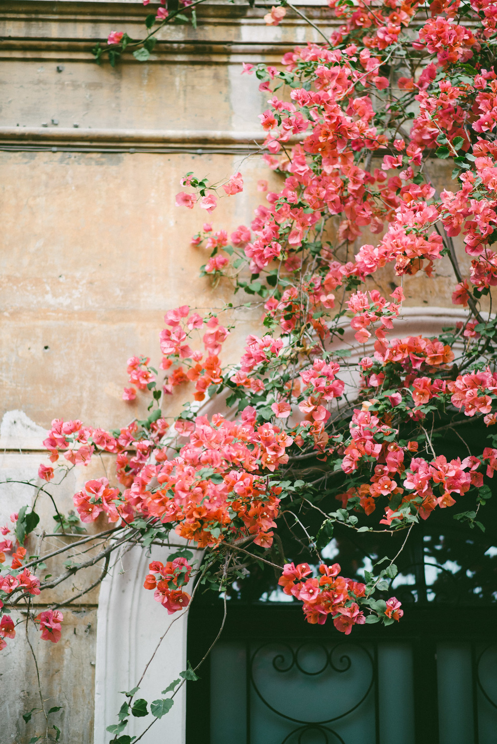 flowers-rome