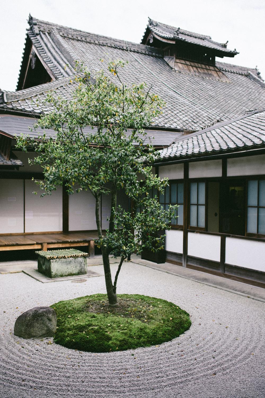 zen-garden-kenninji-temple