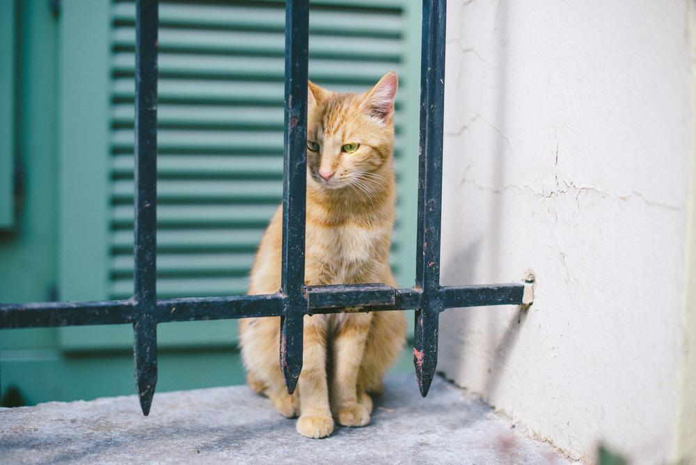 cat-athens